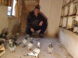 DSCF0001_Bajtek-Tibor_Heremans-Pigeons