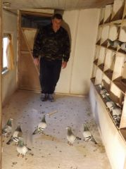 DSCF0002_Bajtek-Tibor_Heremans-Pigeons