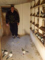 DSCF0003_Bajtek-Tibor_Heremans-Pigeons