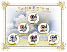 Bajtek-Tibor-Heremans-Pigeons-Tablo-2014-C-WEB