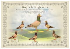 Tablo-Bajtek-Tibor-Heremans-Pigeons