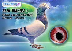 NL10-1097167-kh-Bajtek-Tibor-16